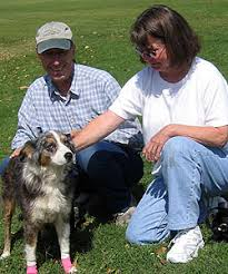 australian shepherd eyesight nor cal aussie rescue adopted