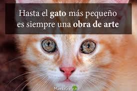 imagenes de gatitos sin frases frases sobre ojos de gato mundo gato