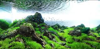 Aquascapes Pools Ultra Water Creations Pools Spas North Texas