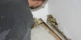 How Do You Get Rid Of Mold In A Basement by 7 Signs You Need A Dehumidifier Huffpost