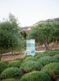 how to keep honeybees modern farmer