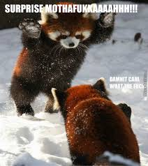 Red Panda Meme - red panda specialty snow sneak attack by canadianbabe meme center