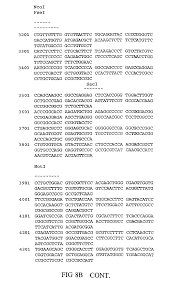 patent us7897842 gntiii expression in plants google patents
