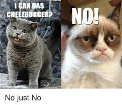 No Just No Meme - i can has cheezburger no just no lolcats meme on me me