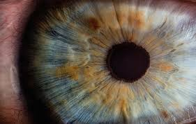 Gene Therapy For Blindness Therapy To Cure Blindness Gets Approval From Fda Advisers