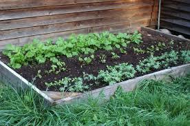 Vegetable Garden Preparation by Winter Vegetable Garden My Own Personal Jungle
