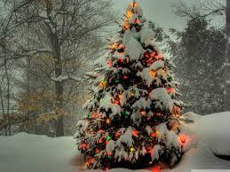 50 beautiful christmas tree wallpapers trees beautiful and