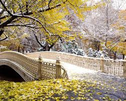 beautiful bridge of central park new york city united states photo