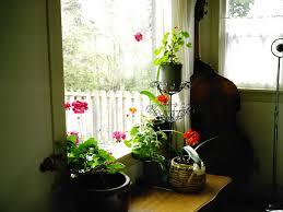 indoor flowering plants minerva u0027s garden blog