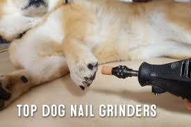 dog nail grinder u2013 what are dog nail grinders used for my first