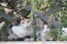 free images kitten fauna pets whiskers animals vertebrate