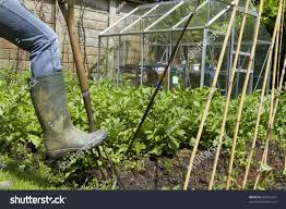 muddy welly digging fork on private stock photo 82691242