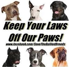 american pitbull terrier uk law 251 best bsl images on pinterest pitt bulls pit bull