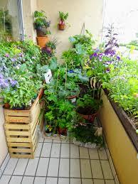 gem se pflanzen balkon gemüse aus balkonien aller guten gärten sind drei seite 23