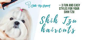 shih tzu haircuts shih tzu haircuts teddy bear puppy lion cut and other safe