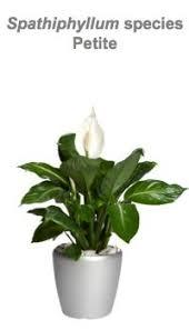 Indoor House Plants Low Light 72 Best Best Indoor Houseplants Images On Pinterest Plants