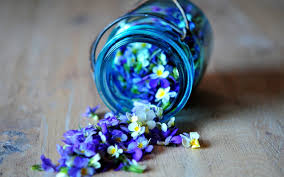 white and blue flowers white and blue flower wallpaper blue and white flowers wallpaper