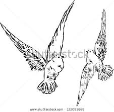 two doves stock images royalty free images u0026 vectors shutterstock