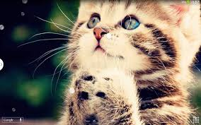 cute pics for background cute cats live wallpaper android apps on google play