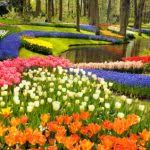 pretty flower gardens pictures flower garden pictures pictures of