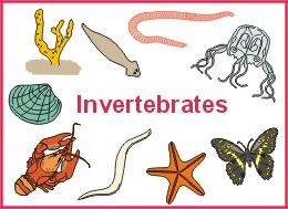 kingdom animalia invertebrates mrs lp u0027s 7th grade science page