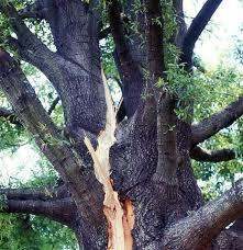 bartlett tree experts lightning protection