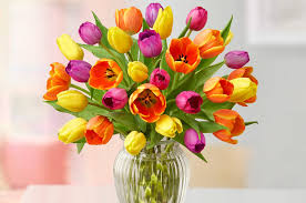 How To Take Care Of Flowers In A Vase Facts About Tulips Tulip Care Tulip History Petal Talk