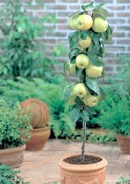 fruit on the patio and small garden