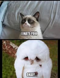 White Owl Meme - sad white owl memes memes pics 2018