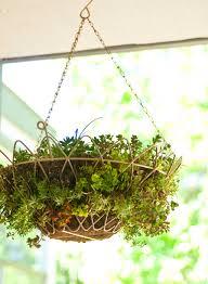 succulent hanging basket popsugar home