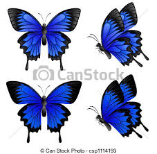 blue butterfly four blue butterflies isolated on white drawings