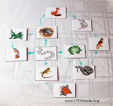 stem mom food chain activity worm unit