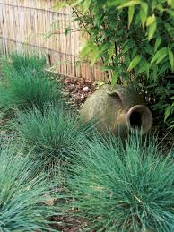 13 best grass images on ornamental grasses