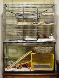 Cheap Rat Cage The Rat Lady Toy Ideas Cage Food Pet Best Bedding Australia Img