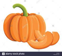 pumpkin icon harvest thanksgiving vector illustration isolated on