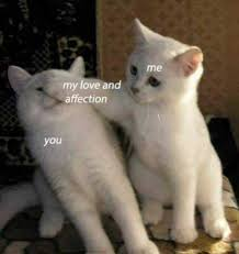 Meme Love - dopl3r com memes me my love and affection you