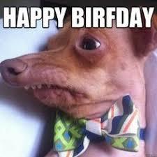 Birthday Meme Dog - tuna the phteven dog happy birthday just funny pinterest
