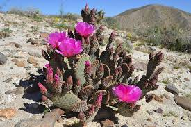 anza borrego desert flowers how to avoid wildflower crowds in the desert this weekend