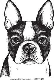royalty free portrait sketch of a french bulldog or u2026 260673233