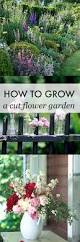 how to grow a cut flower garden cut flower garden beautiful