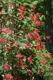 plants for native bees north carolina u0027s list of the ten top choices for native plants
