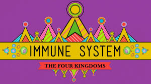 your immune system natural born killer crash course biology 32