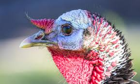 can turkey stand photos