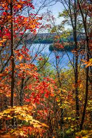 fall forest framing scenic autumn lake lookout trail