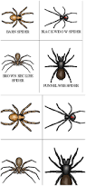 spider type printable cards for toddlers and preschoolers spider