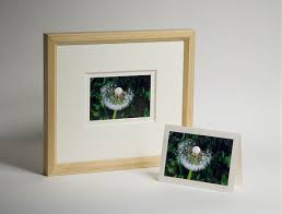 framed greeting cards michael levy photo decor