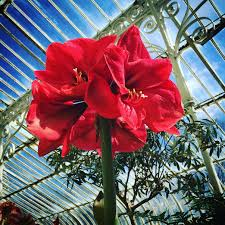 Botanic Garden Belfast by Exploring Belfast Botanic Gardens Dear Mummy Blog