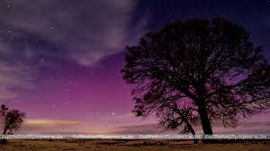 tree silhouette on starry night full hd wallpapers