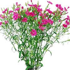 Bulk Wedding Flowers Pink Dianthus Bulk Wedding Flowers