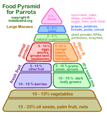 food pyramid for parrots holistic bird newsletter